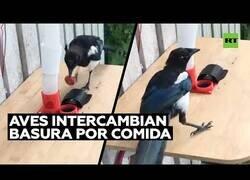 Enlace a Un hombre hace que los pájaros recojan basura a cambio de comida