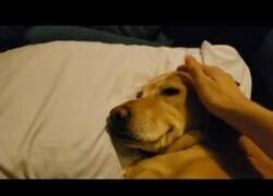 Enlace a Despertando a un perro que estaba teniendo una pesadilla