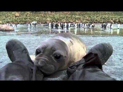 Una foca bebé curiosea los pies de un cámara