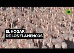 Enlace a Flamencos se reúnen en una laguna de Turquía