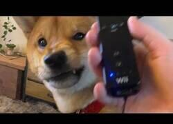 Enlace a El perro que odiaba Nintendo
