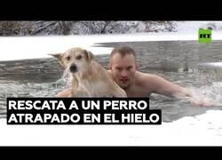 Enlace a Salva a un perro atrapado en un estanque helado