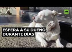 Enlace a Una perra espera en la puerta de un hospital a su dueño hospitalizado