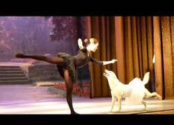 Enlace a El perro que sabe bailar ballet
