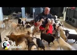 Enlace a Así es vivir junto a 20 perros