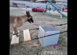 Enlace a El perro que hace parkour