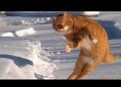 Enlace a Recopilación de gatos en la nieve