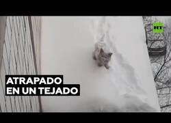 Enlace a Rescatan a un gato que llevaba varios días atrapado en un tejado helado