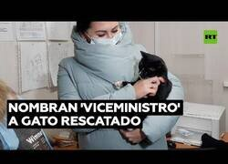 Enlace a Un gato que estuvo a punto de ser triturado es nombrado 'viceministro regional'