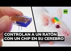 Enlace a Logran controlar el cerebro de un ratón