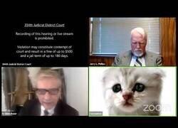 Enlace a Aparece en una videoconferencia de trabajo con un filtro de gato