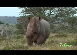 Enlace a Cómo parar la embestida de un rinoceronte