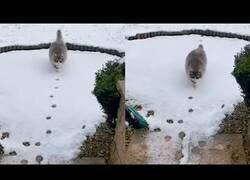 Enlace a Un gato sigue sus huellas en la nieve para volver a casa
