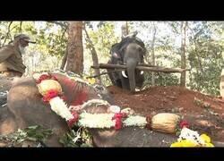 Enlace a Así incineran a un elefante en la India