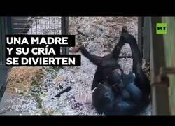 Enlace a Así de bien se lo pasan un madre chimpancé y su cría