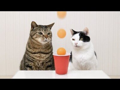 Gatos haciendo increíbles Trick Shots de Ping Pong