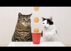 Enlace a Gatos haciendo increíbles Trick Shots de Ping Pong