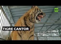 Enlace a El tigre que sabía cantar