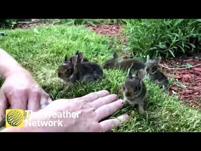 Llamando la atención de seis pequeños conejitos