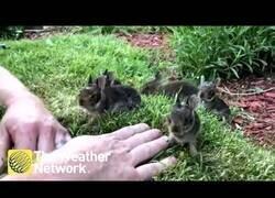 Enlace a Llamando la atención de seis pequeños conejitos