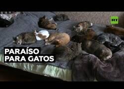 Enlace a Se compra una casa solo para alojar a decenas de gatos