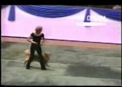 Enlace a Un perro y su dueña bailando la canción de Grease