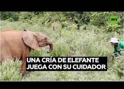 Enlace a Así juegan una cría de elefante y su cuidador
