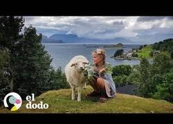 Enlace a Una niña y su oveja son las mejores amigas