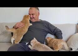 Enlace a Cuando eres un hombre serio pero no puedes resistirte al ataque de ternura de unos gatitos