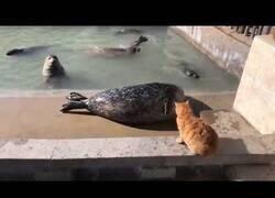 Enlace a Un gato manda a callar a una foca