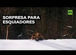 Enlace a Un oso persigue a unos esquiadores