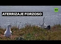 Enlace a Cuando un albatros se buguea