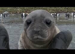 Enlace a Un león marino juguetea con los pies de un cámara