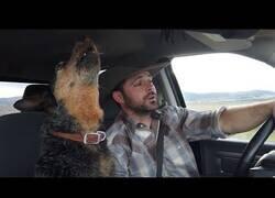 Enlace a Un perro canta su canción favorita junto a su dueño
