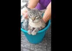 Enlace a Un gato pronuncia el nombre de 'Raúl' mientras lo bañan