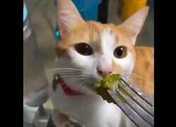 Enlace a La curiosa reacción de un gato al probar el brocoli