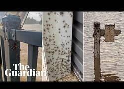 Enlace a Miles de arañas invaden casas huyendo de las inundaciones en Australia