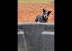 Enlace a Un perro intenta frenar el curso del agua