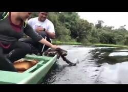 Enlace a Un perezoso jugando con el agua desde un bote