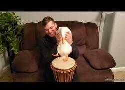 Enlace a El pato que sabía tocar el tambor
