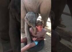 Enlace a Un bebé elefante jugando con un chico