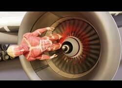 Enlace a Esto es lo que ocurre cuando un motor de avión engulle a una persona