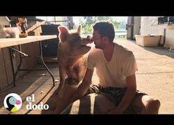 Enlace a Así es tener un cerdo como mascota