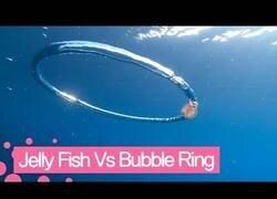 Enlace a Una medusa queda atrapada en un anillo de burbuja
