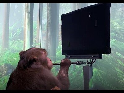 Poniendo a prueba la mente de un mono con diferentes juegos
