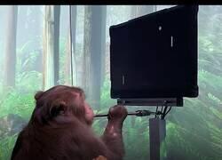 Enlace a Poniendo a prueba la mente de un mono con diferentes juegos