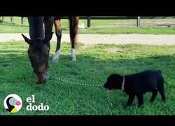 Enlace a El perro que vive como un caballo