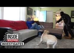 Enlace a Poniendo a prueba las reacciones de diferentes perros cuando les entran en casa
