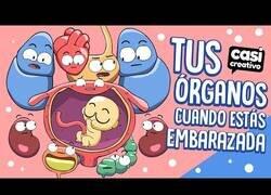 Enlace a Tus órganos durante un embarazo