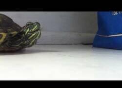 Enlace a ¿Alguna vez habías visto estornudar a una tortuga?